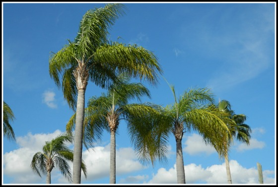 Palm TreesBorder